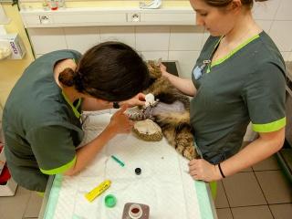 clinique-vet-occitanie-soins-04